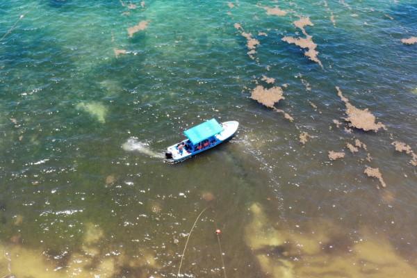 limpian playas dia mundial del medio ambiente