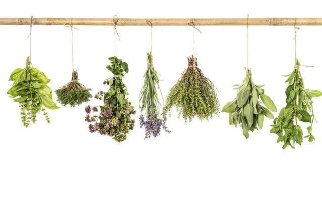 Algunas hierbas sirven como condimentos de algunos platillos típicos. Foto: Especial