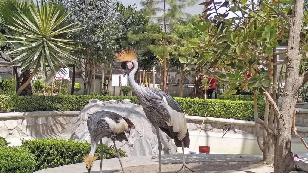 EL aviario del Jardín Botánico municipal, el cual cuenta con 180 aves de 26 especies, entre las que se encuentran la guacamaya verde, halcón caracara, aguililla de Harris, tucán real, pavorreales, flamencos, águilas y periquillos. FOTO: JOSÉ RÍOS