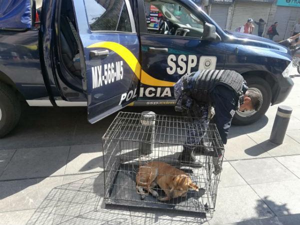 El perro se encontraba en el cruce de las calles Corregidora y Correo mayor en el Centro de la CDMX. FOTO:ESPECIAL