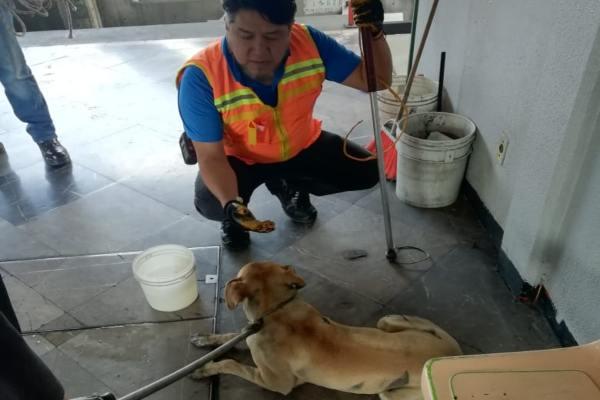 Los canes rescatados por el STC Metro fueron llevados al Centro de Transferencia Canina (CTC) del Metro. Foto: Archivo | Cuartoscuro