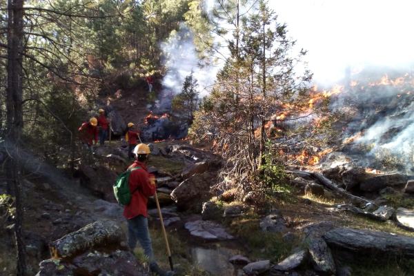 Secretaría de Recursos Naturales y Medio Ambiente hace el llamado a la sociedad a que cuidar los bosques