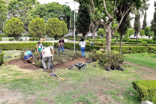 inicia reto verde reforestación cdmx