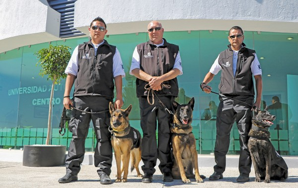 En la actualidad están listos ocho de 11 binomios caninos. Foto: Especial
