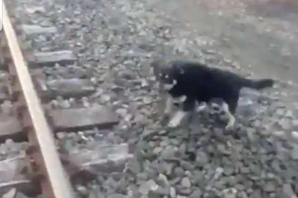 Maquinista detiene su marcha para salvar a perro atado a las vías del tren