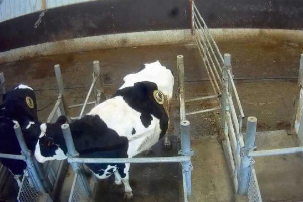 El grupo de defensa de los derechos animales, publicó imágenes realmente perturbadoras