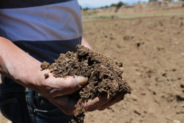 Faltan fertilizantes en Guerrero.