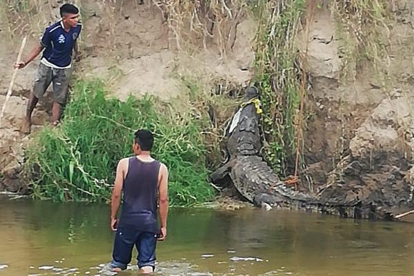 Cocodrilo-gigante-rio-Oaxaca-proteccion-civil
