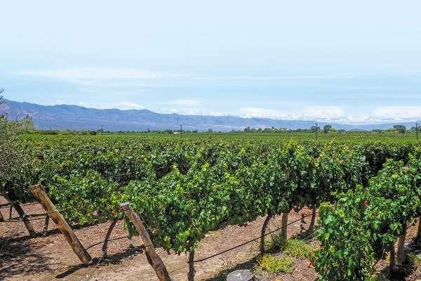 Se prevén 900 mil visitantes en La Ruta del Vino. Foto: Especial
