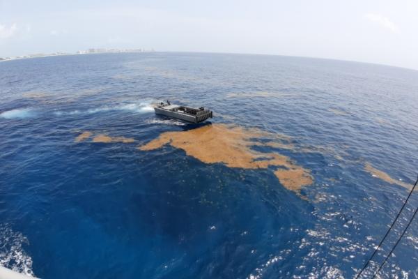 Resultados de la estrategia contra en el sargazo en el caribe mexicano. Foto: Cortesía