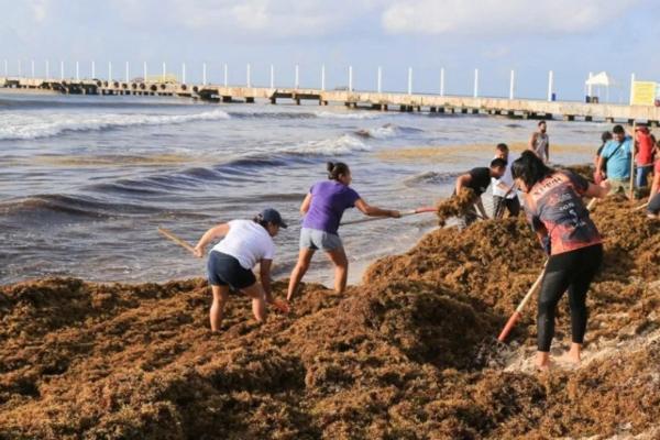 A esto se suma que en altamar se han recolectado 155 toneladas de alga, que en volumen representa 204.50 m3. Foto Especial