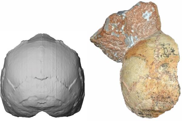 cráneo homo sapiens