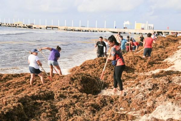 Zonas como Holbox Centro, Isla Mujeres norte y Cozumel reportan escasa llegada del sargazo. Foto: Archivo | Cuartoscuro