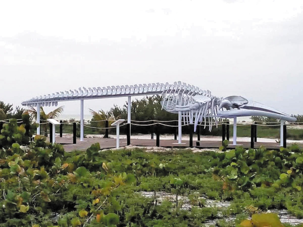 LIBRE. A diferencia de otro esqueleto exhibido en Baja California, en Progreso no se cobra por verlo.  Foto: Especial.