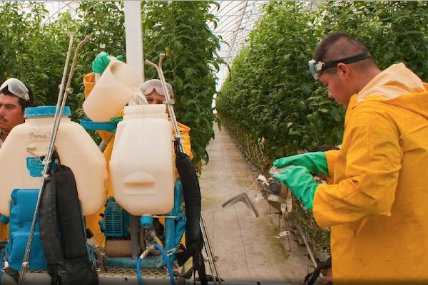 Fertilizantes-Guerrero-Sader-campesinos