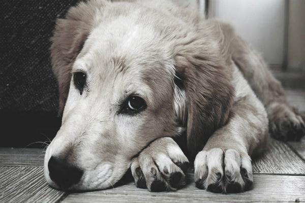Mueren 30 perritos envenenados en Sinaloa. Foto: especial