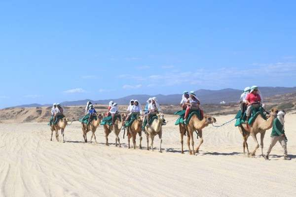El Tour Safari en Camello y Paseo por el Desierto es una divertida experiencia que puede disfrutarse en Los Cabos, San Lucas. Foto: Twitter
