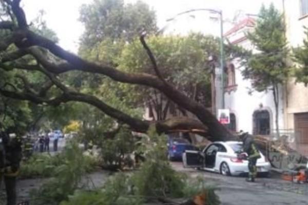 árbol aplasta a vehículo en la condesa
