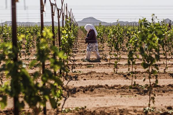 Jornaleros_agrícolas_crímen_organizado_San_Luis_Potosí1