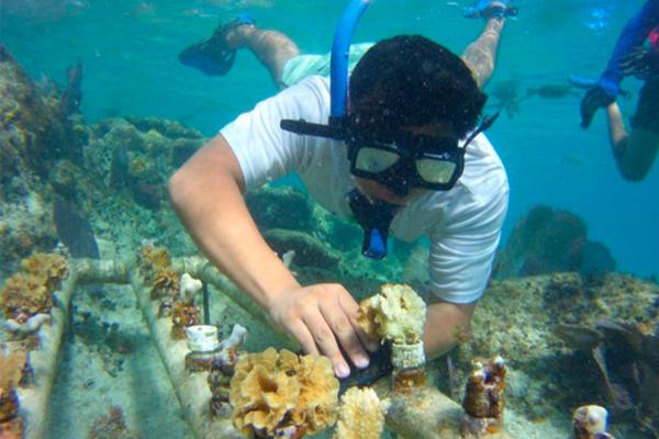El proyexcto se encuentra en una primer etapa: se cuidan los corales, se limpian y monitorean. FOTO: Especial