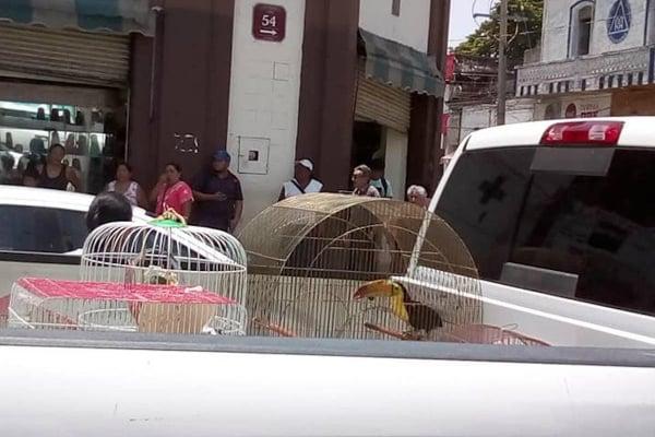 Usuarios de redes sociales difundieron imágenes en las que se observa que los funcionarios federales decomisaron a los pájaros recluidos en varias jaulas, las cuales colocaron en una camioneta oficial de esa dependencia. Foto: Especial.