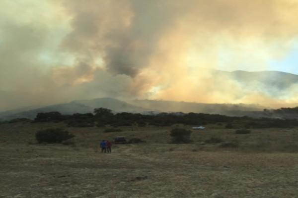 Reportan incendio forestal en Tijuana