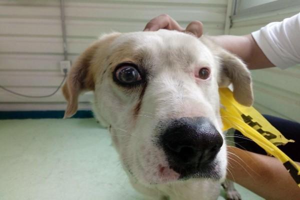 Veterinarios operan a perro en el Metro