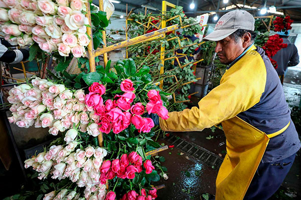 Buscan_eliminar_intermediarios_comercio_flores