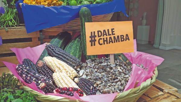 MAÍZ. La mayor diversidad del maíz es mexicana, con 64 razas en el país. Foto: Cortesía