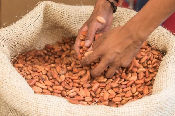 """""""Salva nuestra sazón"""", la iniciativa que fomenta el rescate y uso de ingredientes la cocina tradicional"""