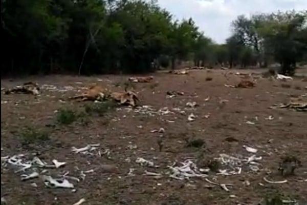Reportan sequías en el norte del país