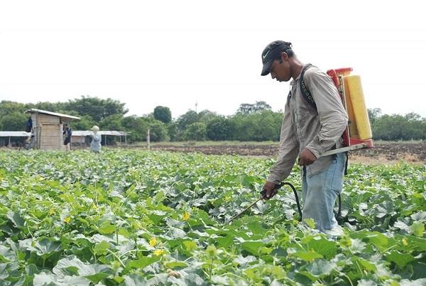 Michoacán se producen 117 cultivos, de los cuales 15 tienen el primer lugar de producción en el país, entre estos el aguacate y zarzamora -donde también es líder mundial-, durazno, fresa, guayaba, limón, lenteja y otros. Foto: Cuartoscuro
