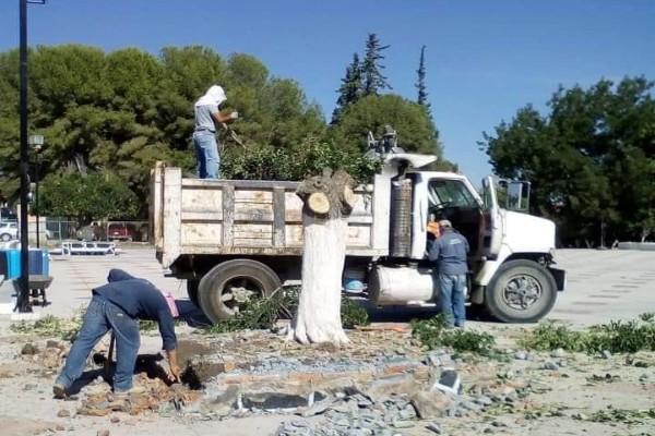 Talan árboles por concierto de los Ángeles Azules