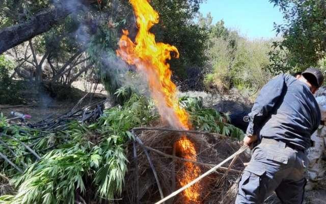 Quema de marihuana en Baja California