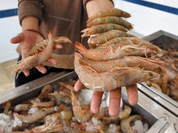 Plantas de acuacultura se ven afectadas por la falta de certificación y permisos. Foto: Cuartoscuro