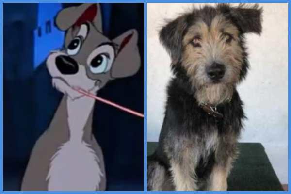 Monte, el perro callejero que se volvió famoso por
