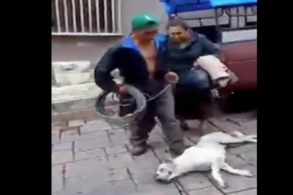 Hombre en Chiapas agrede a un perro mientras una mujer lo enfrenta Foto: Especial