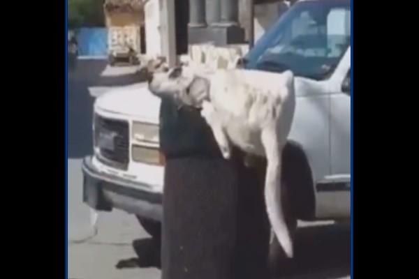 perro_callejero_puebla_abusao_animal