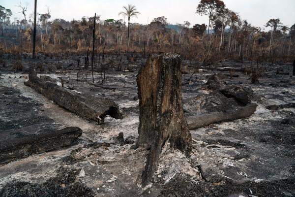 DAÑOS. El estado de Pará, uno de los más afectados por los incendios. Foto: AP
