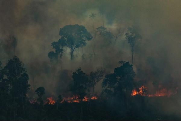 incendio_amazonas (1)