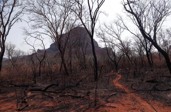 bolivia_incendios_forestales