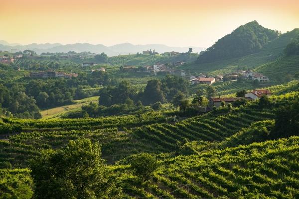 Las colinas de Conegliano y Valdobbiadene, llamadas colinas del prosecco y consideradas ya Patrimonio Mundial de la Unesco. Foto: Especial