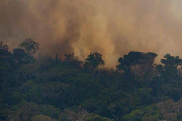ayudar_al_Amazonas_incendios_forestales_consumo_de_carne