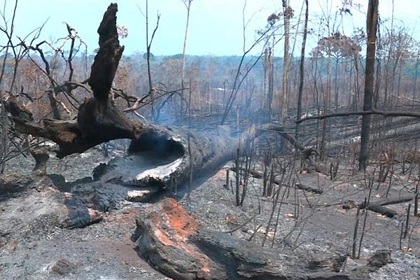 Incendios_Amazonia_no_nos_dejarán_sin_oxígeno