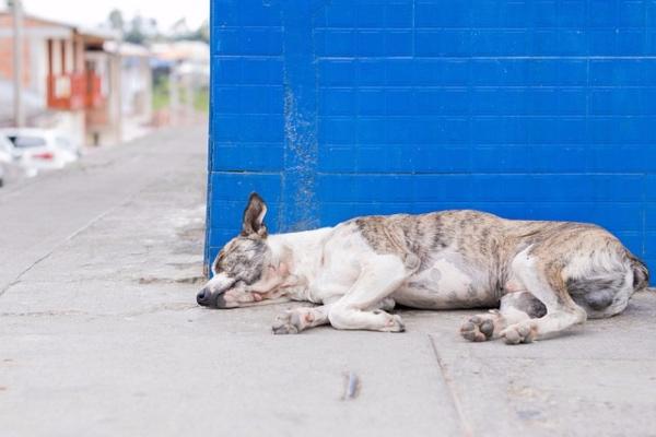 perros_muertos_extraña_enfermedad_noruega