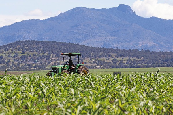 CAÍDA. Por quinto año seguido se reduce el gasto público para el sector agropecuario. Foto: Cuartoscuro