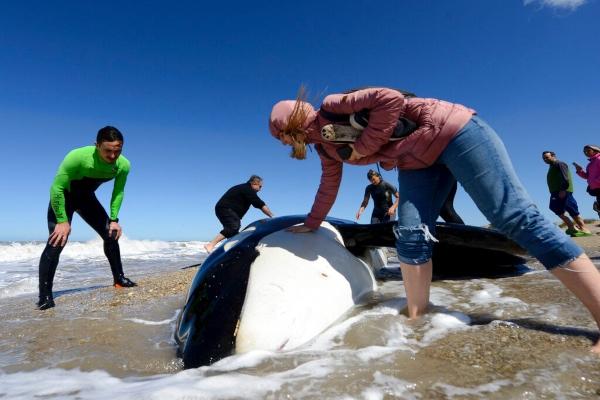 orcas_costa_argentina