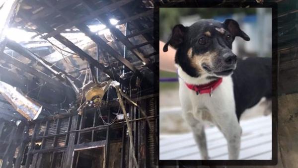 El dueño del perrito declaró que hizo todo lo posible por regresar por él pero el fuego era demasiado intenso para intentar volver. FOTO: Especial