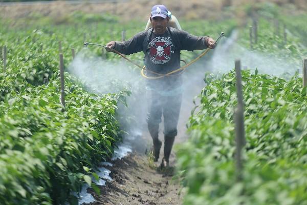 Se calcula que al menos 100 mil jornaleros, que trabajan y viven en situaciones precarias, hace que mucho de ellos sufran enfermedades que tenga que ver con los pesticidas. FOTO: JUAN JOSÉ ESTRADA SERAFÍN /CUARTOSCURO.COM