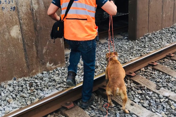 En caso de que los canes no sean reclamados por sus dueños, serán puestos en adopción. Foto: Especial